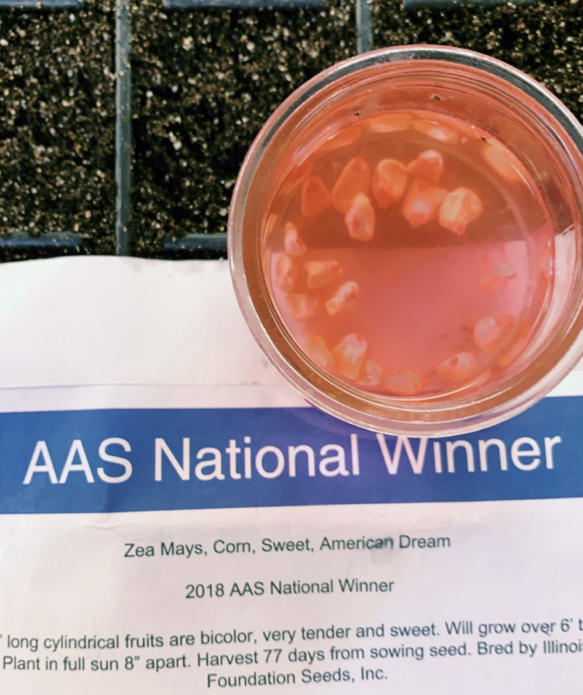 A glass jar holding corn soaking in pink water sits atop a planting tray with dirt. An envelope identifying the corn rests halfway down the tray.