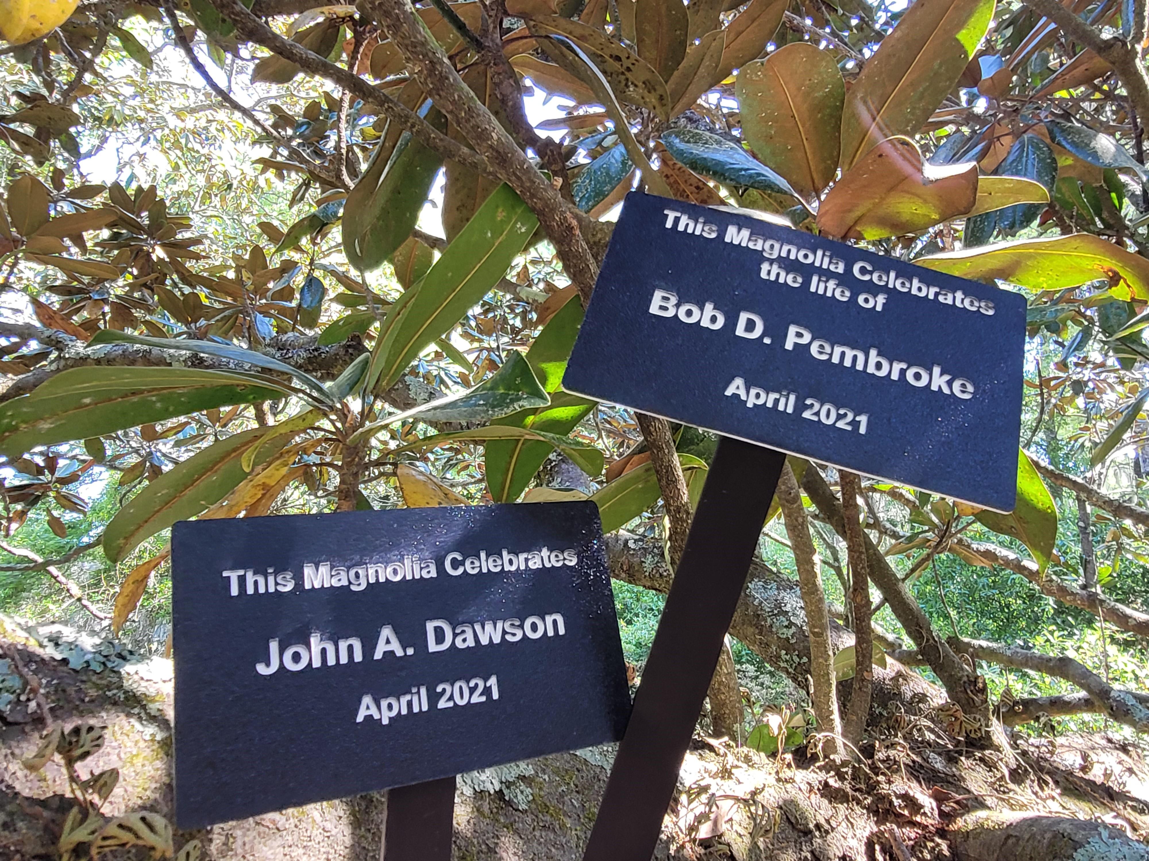 Celebrations along Magnolia Allee
