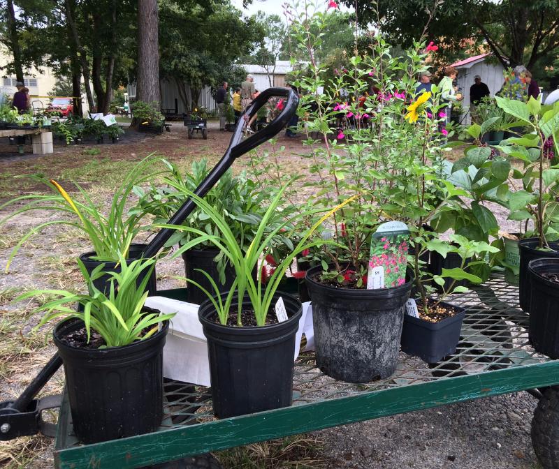 Brookgreen Plant Sale Brookgreen