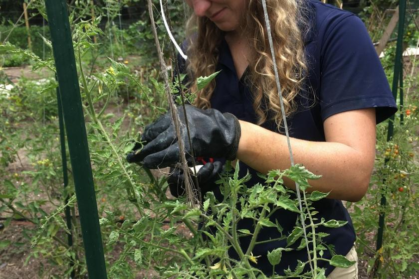 Interning with Horticulture | Brookgreen