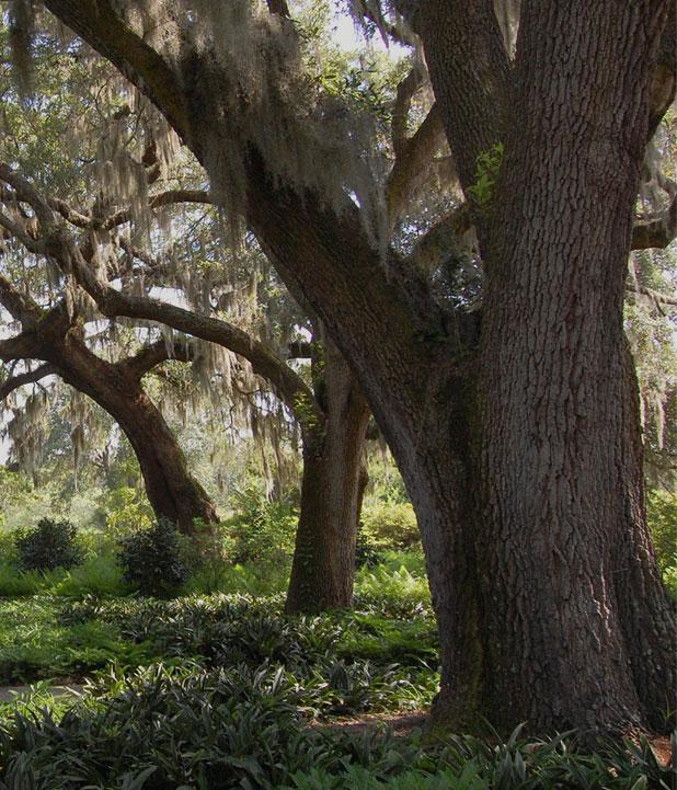 Gentil Botanical Gardens